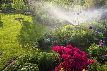 proper watering for garden
