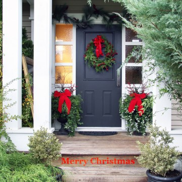 Christmas plants for garden decoration