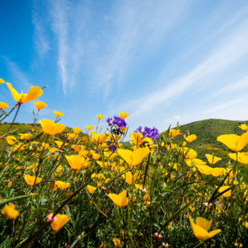California Spring Tips